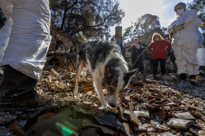 Search Dogs and Archaeologists Look for Cremated Remains Amid a Wildfire's Debris