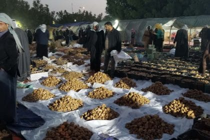 Would You Risk Your Life for a Truffle? In Iraq's Desert, the Dangerous Search Is Worth the Prize