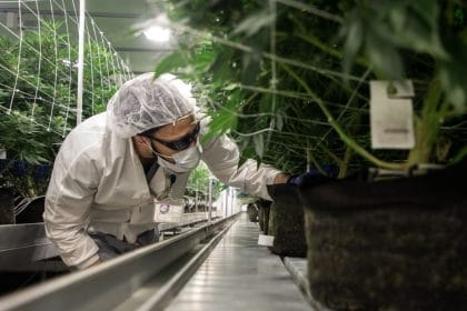 US Court Allows Patent for Marijuana Formulation