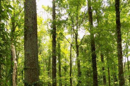 Forestry Industry Says Federal Aid Could Help Slow Global Warming