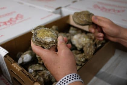 Florida's Oysters in Apalachicola, Cedar Key Face Climate Threats to Survival