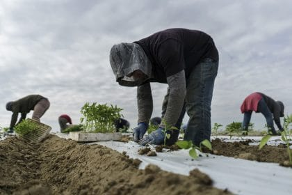 Potential E-Verify Deal Would Give Legal Status to Farmworkers