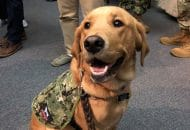 Sit, Heal: Dog Teaches Military Medical Students the Merits of Service Animals