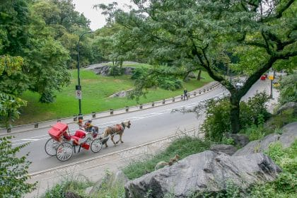NY Mayor Bans Sale of Foie Gras, Limits Central Park Horse Carriage Operation