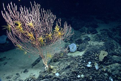 High Court Won't Wade Into Undersea Monument Case