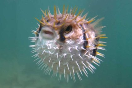 An Ingenious Off-grid Water Purifier Inspired by Pufferfish Runs on Nothing But Sunlight