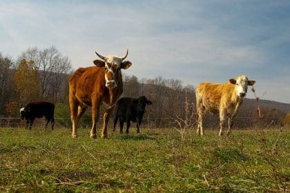 New USDA Grants Intended to Boost Beef and Poultry Industries