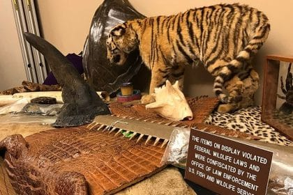 Online Animal Trafficking A 'Significant Challenge' for US Says New Report